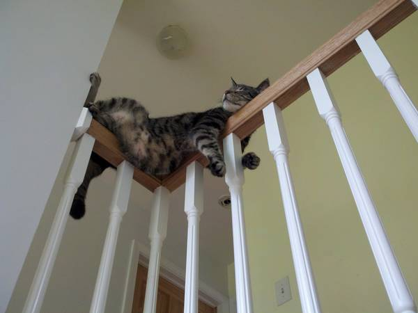 http://www.hirporkolt.com/2015/03/15/cats-are-strange/
