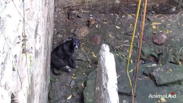 chien puits (2)