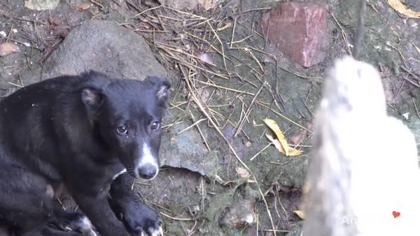 chien puits (3)