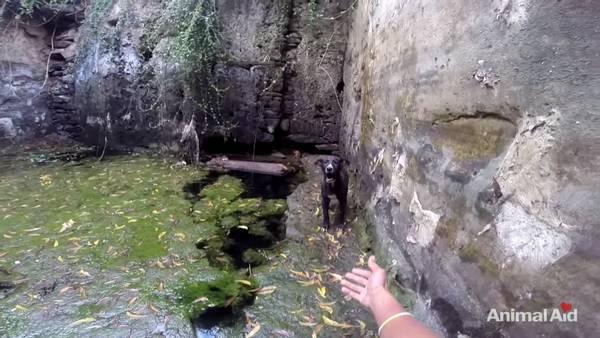 chien puits (5)