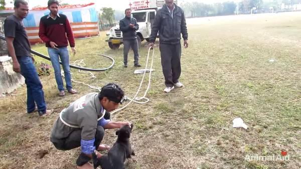 chien puits (8)
