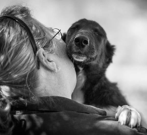 chiens-aiment-maitres (13)