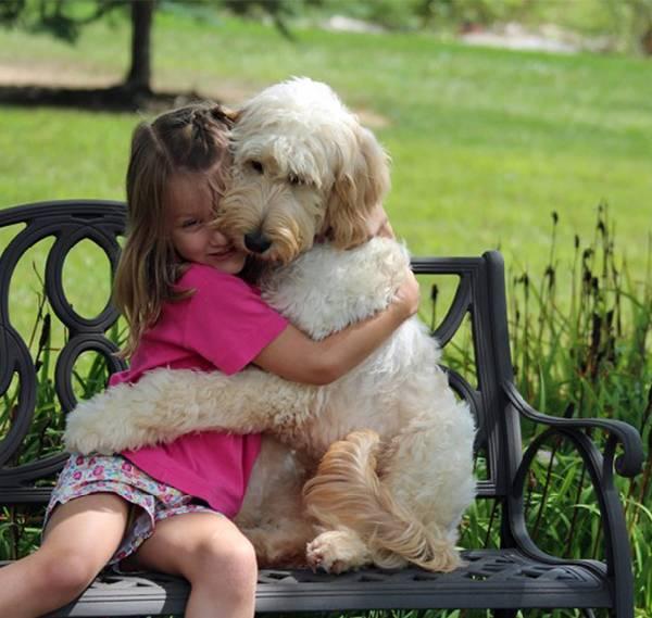 chiens-aiment-maitres (2)