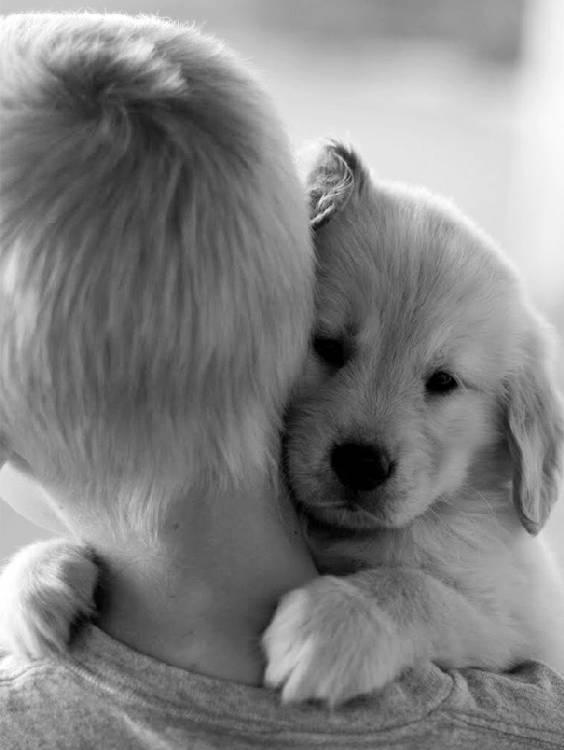 chiens-aiment-maitres (24)