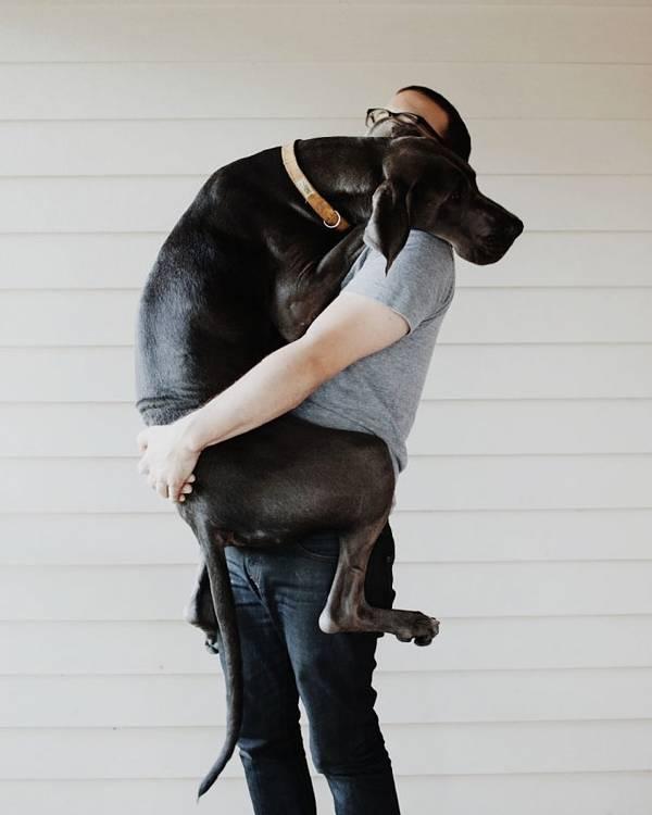 chiens-aiment-maitres (25)