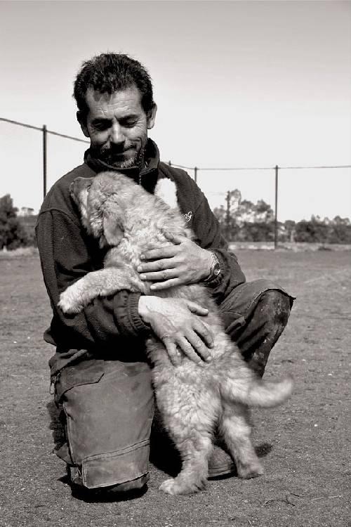 chiens-aiment-maitres (8)
