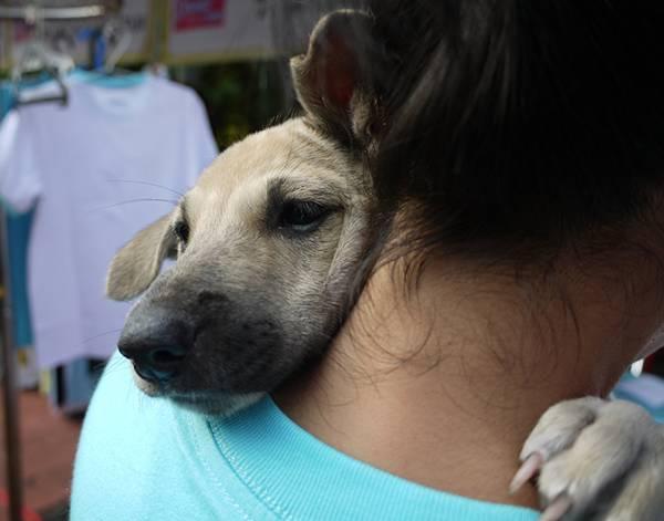 chiens-aiment-maitres (9)