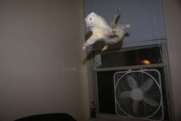 http://img.izismile.com/img/img3/20101126/640/these_funny_animals_556_640_39.jpg