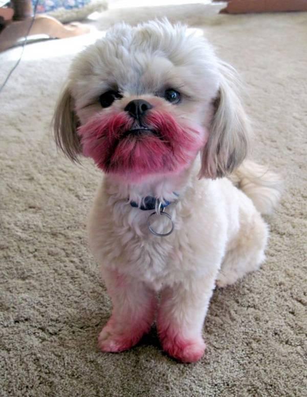 http://cuteoverload.com/2010/06/08/no-i-havent-seen-your-lipstick/