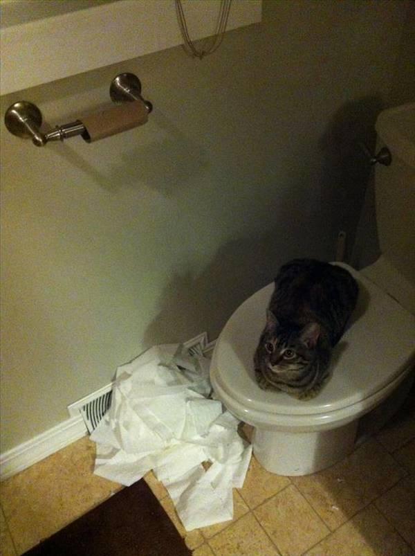 http://www.dumpaday.com/wp-content/uploads/2013/03/cat-unrolls-toilet-paper.jpg
