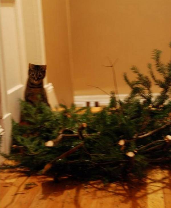 http://theverybesttop10.com/animals-who-think-its-time-to-take-down-the-christmas-tree/