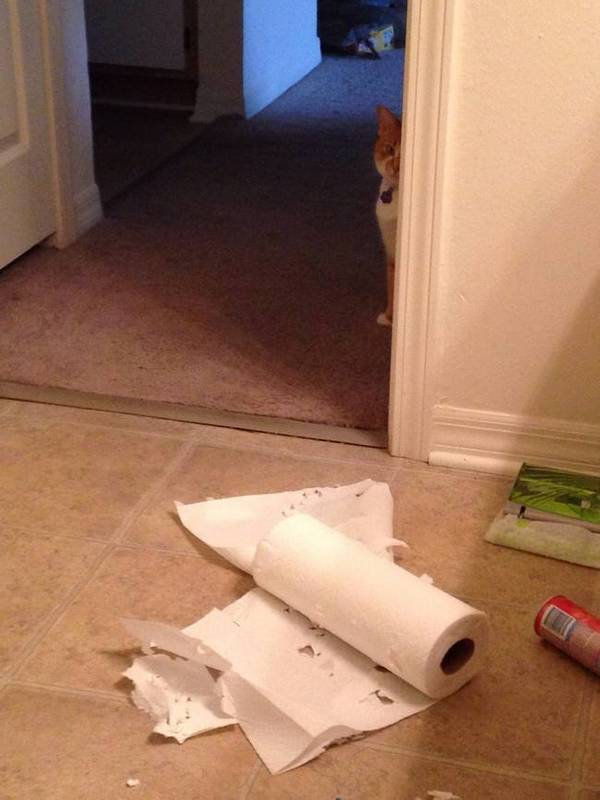http://thugviral.com/these-19-guilty-dogs-and-cats-are-hilariously-terrible-at-telling-lies/