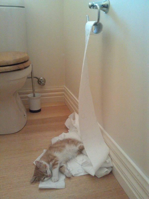 http://blogs.rediff.com/ningparsolen1973/2014/01/20/33-weeks-orange-on-toilet-paper/