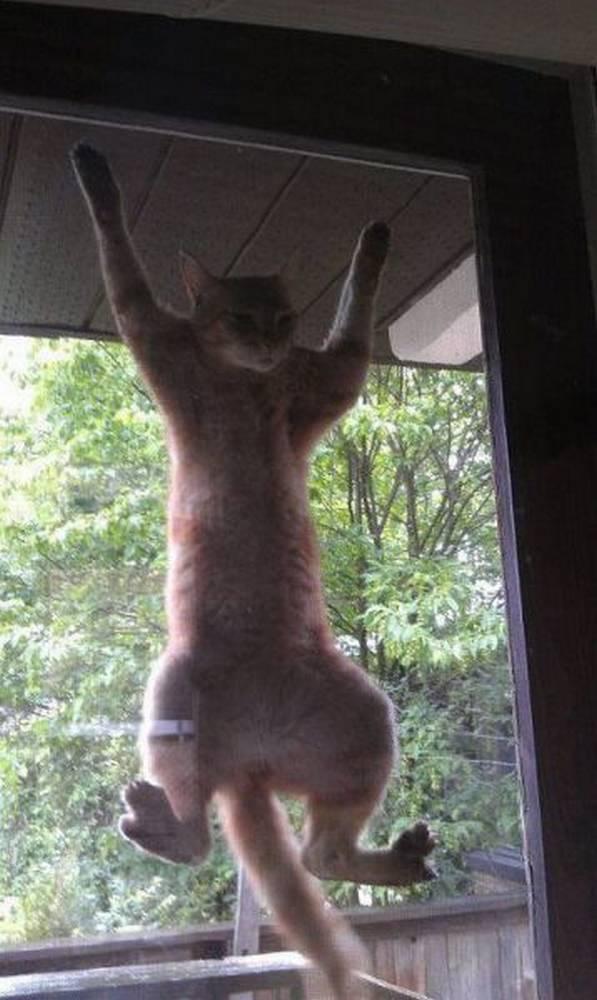 http://xaxor.com/wp-content/uploads/2012/06/funny-cute-animal-pics-part19-9.jpg
