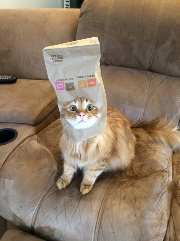 39 chats qui ont de drôles d'idées et qui finissent parfois par le regretter - Animaaaaals