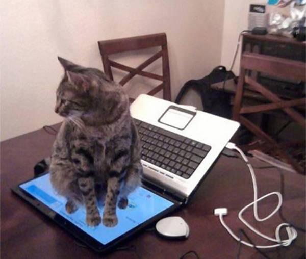http://cilichili.cz/wp-content/uploads/2015/01/cat-logic-funny-10__605.jpg