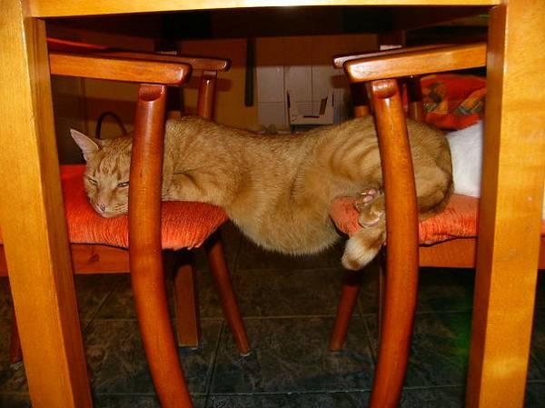 http://www.boredpanda.com/funny-cat-logic/