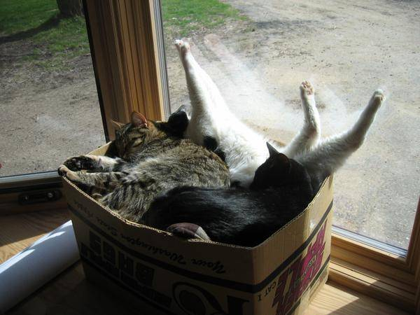 http://cuteanimals.me/p/4a8j/this-is-where-i-keep-my-spare-cats