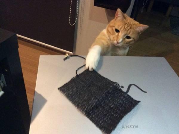 chat-tout-appartient (1)