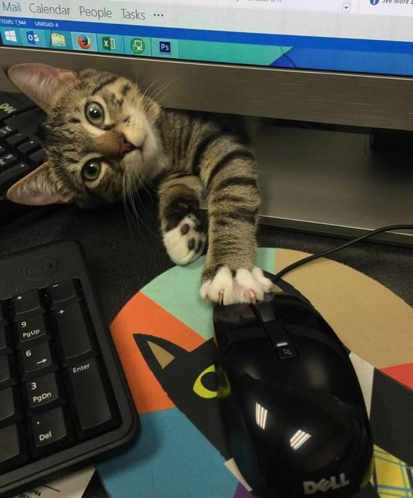 http://hellbird.se/tag/gotta-love-cats/