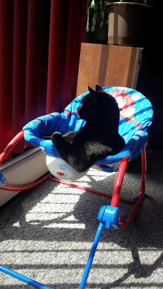 http://www.suggestedpost.eu/cat-photos/