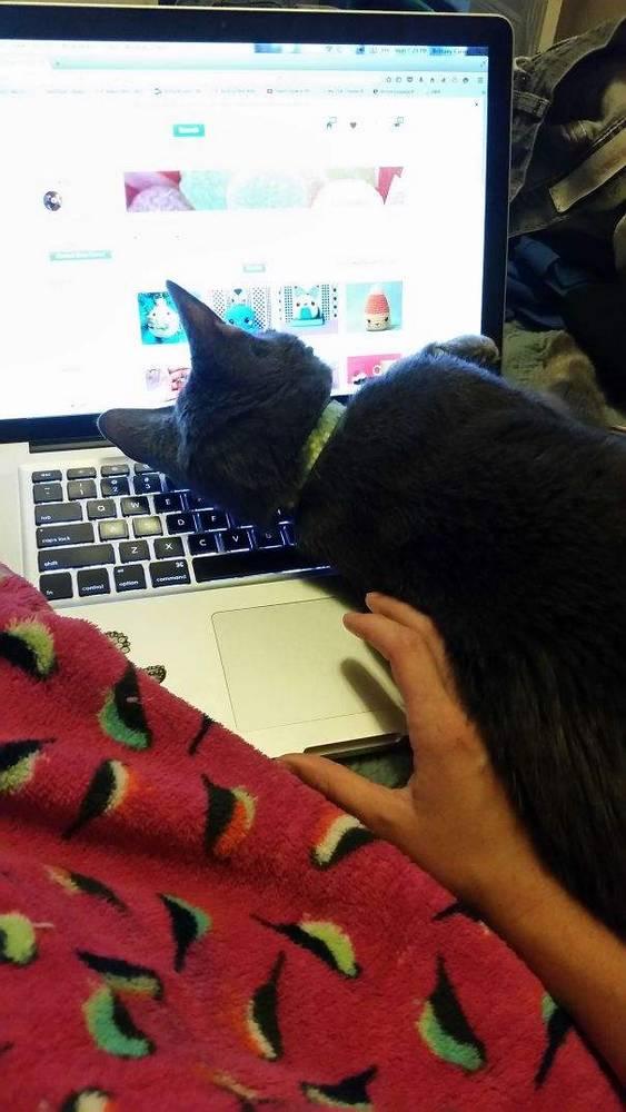 http://www.boredpanda.com/funny-cats-violate-personal-space/