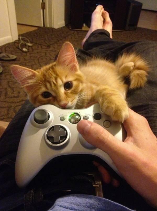 chat-veut-attention (32)