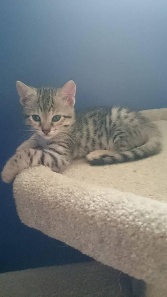chaton-minuscule-sauve (1)