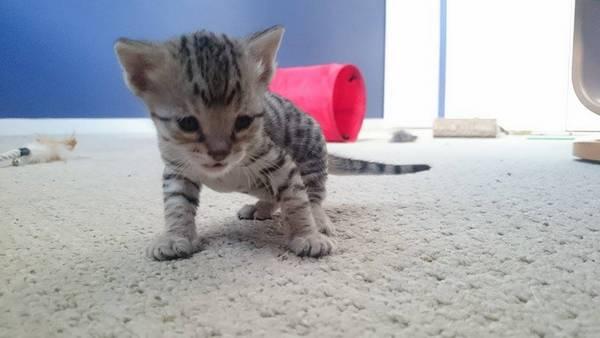 chaton-minuscule-sauve (2)