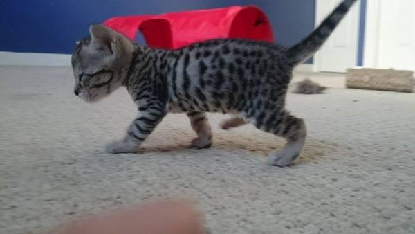 chaton-minuscule-sauve (4)