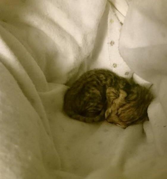 chaton-minuscule-sauve (8)