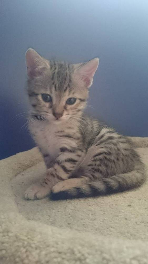 chaton-minuscule-sauve