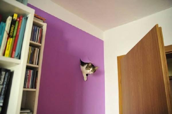chien-chat-destruction (18)