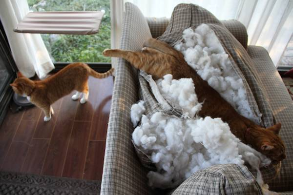 chien-chat-destruction (21)