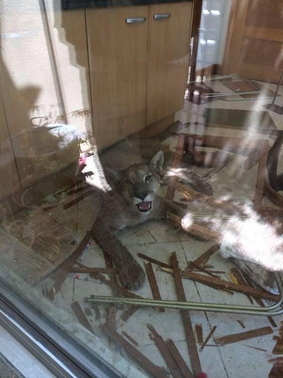 chien-chat-destruction (36)