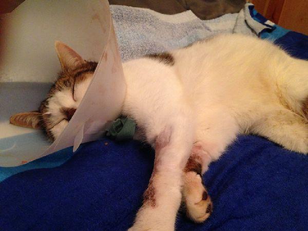 Après l'opération (1)