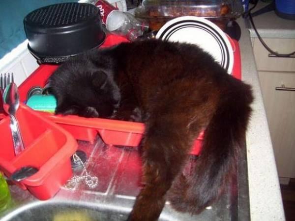 chat-chien-endormi-position-etrange (10)