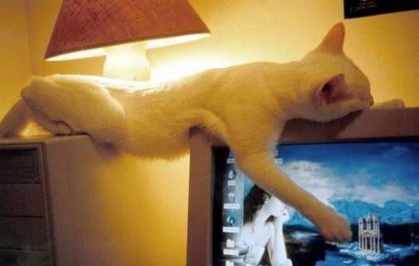 chat-chien-endormi-position-etrange (12)