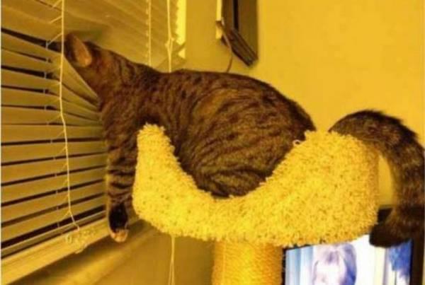 chat-chien-endormi-position-etrange (13)