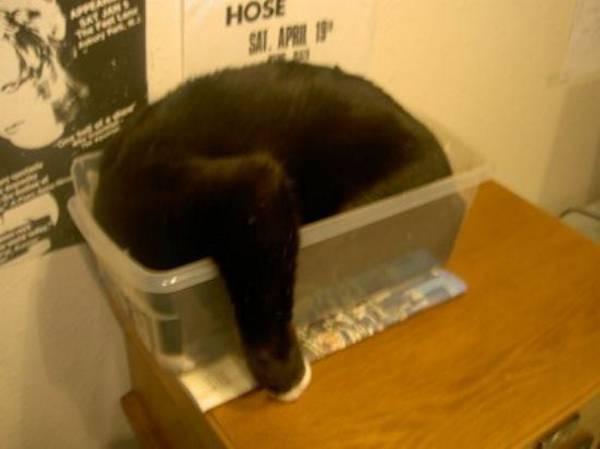chat-chien-endormi-position-etrange (14)