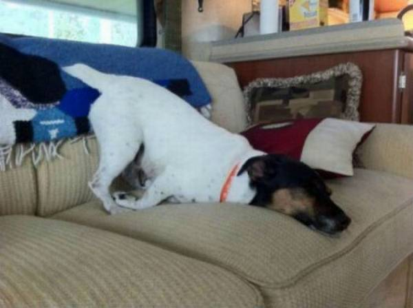 http://barkpost.com/30-dogs-awkwardly-sleeping/