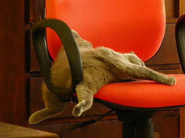 http://listsoplenty.com/pix/cats-will-sleep-anywhere-ii