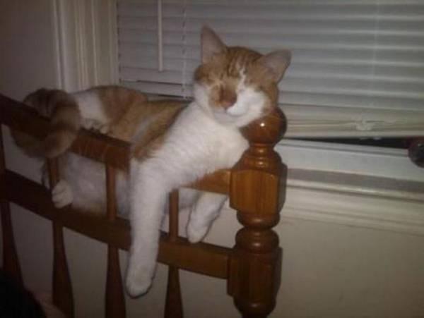 https://thechive.files.wordpress.com/2014/08/cat-nap-7.jpg?h=413&w=550