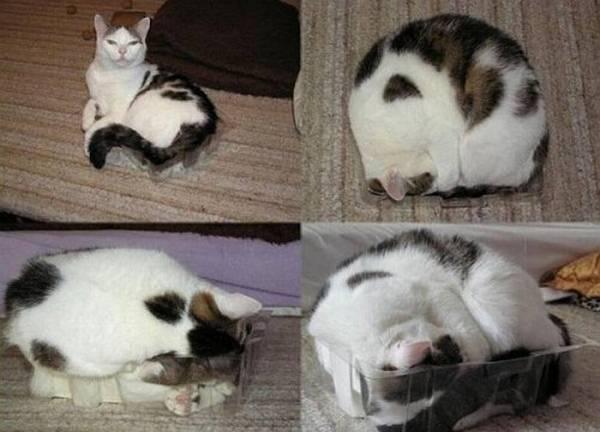 http://www.doodoo.ru/animals/3297-catlike-place.html
