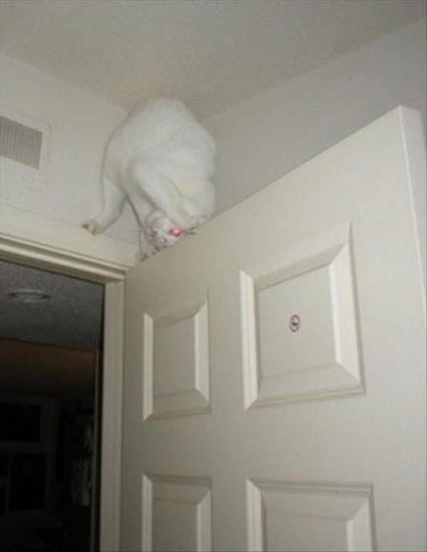 http://www.dumpaday.com/funny-pictures/cats-who-forgot-how-to-cat-20-pics/