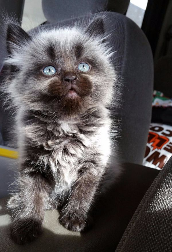 chatons-chiots-adorables (19)