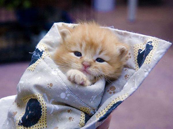 http://lovemeow.com/wp-content/uploads/2011/12/kitten122.jpg