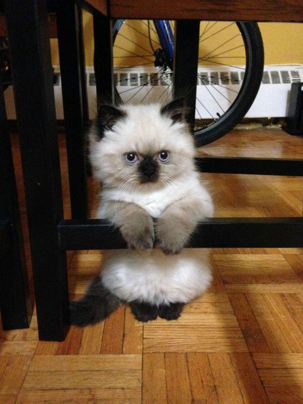 http://thefluffingtonpost.com/post/68168144499/kitten-chin-up