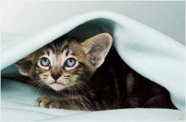 http://catfoto.com/uploads/images/00/00/01/2011/04/29/2a6e3c.jpg
