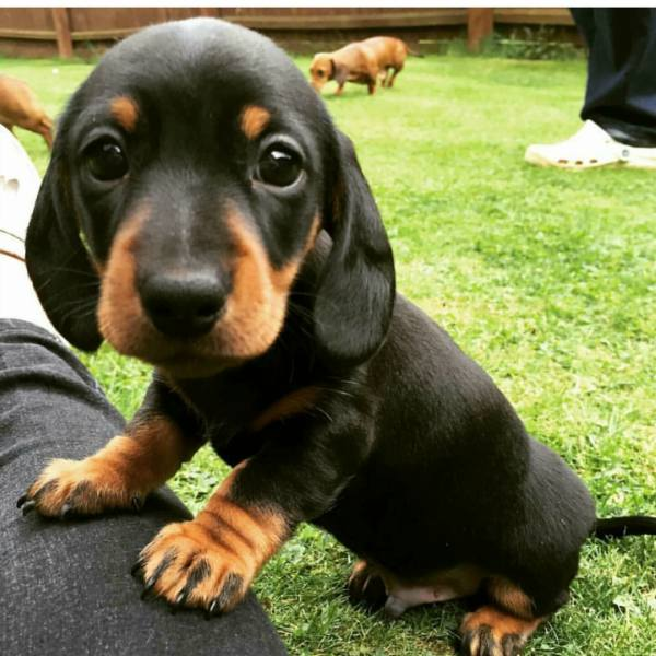 chatons-chiots-adorables (30)